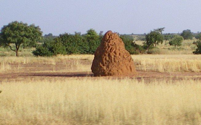 termitire1.jpg